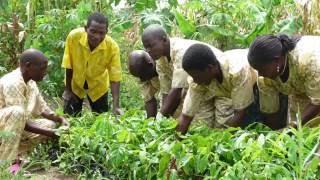 Bäume als natürlicher Dünger – Wiederaufforstung in Afrika