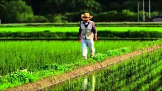 Gemüseanbau in der Stadt – ein Blick in die Zukunft?