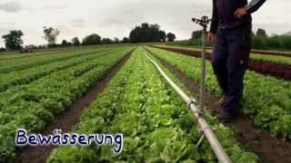 Lerndoku Gemüseanbau im Knoblauchsland – zwischen Nürnberg, Fürth und Erlangen