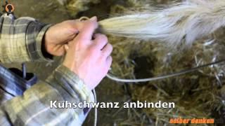 Kuhschwänze anbinden