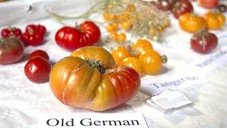 Verbotenes Gemüse – NDR Reportage