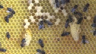 Bienenbeuten – Unterschiede CH-Kasten und Magazin