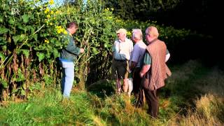 Silphie statt Mais: Biogas aus der Becherpflanze