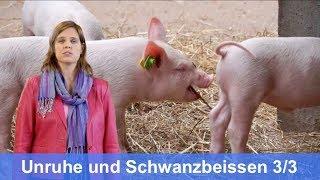 Tierbeobachtung: Schweinesignale 3/3