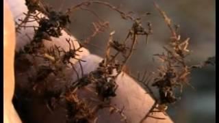 Die wunderbare Welt der Pilze