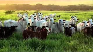 Wie Agroforstwirtschaft die Umwelt schützt