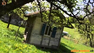 Schwarmzeit im Bienenhaus