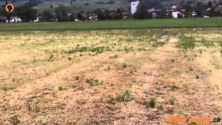 Futterbau: Schnitthöhe, Nutzungszeitpunkt und Hagelschaden