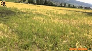 Staunässe und Bodenverdichtung bei Getreide