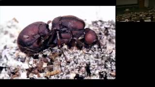 Der Ameisenstaat – ein Superorganismus